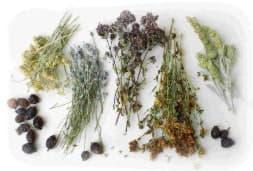 Лікарські рослини та трави