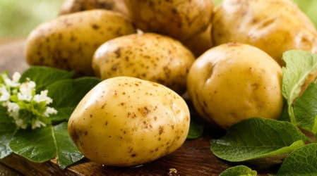Картопля: корисні та лікувальні властивості