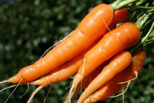 Корисні речовини, що містяться в моркві