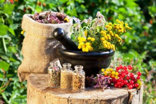 Лікування бронхіту травами