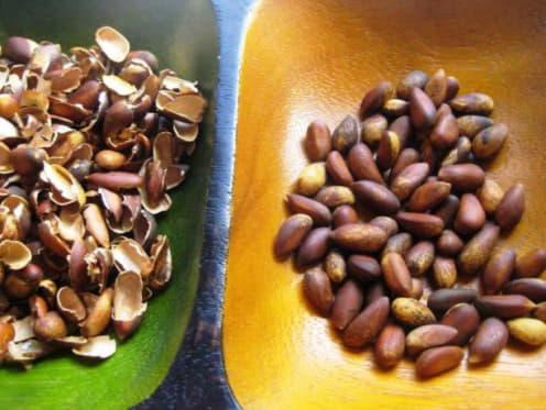 відвар шкаралупок кедрових горіхів