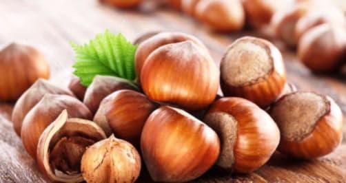 Лісовий горіх: користь і шкода