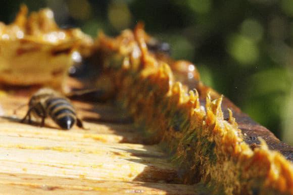 Мед з прополісом: користь і шкода