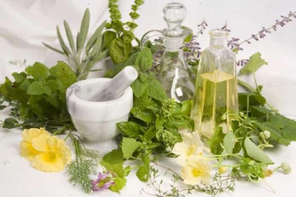 Трави для імунітету - дітям і дорослим в домашніх умовах