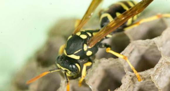 Ефірні олії від укусів комах