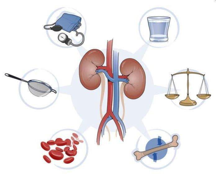 Народні засоби лікування нирок